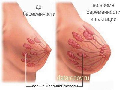 увеличение молочных желез у мужчин